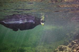 Snorkeling 1 cp xt sm