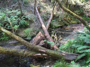 logs in Pudding Creek