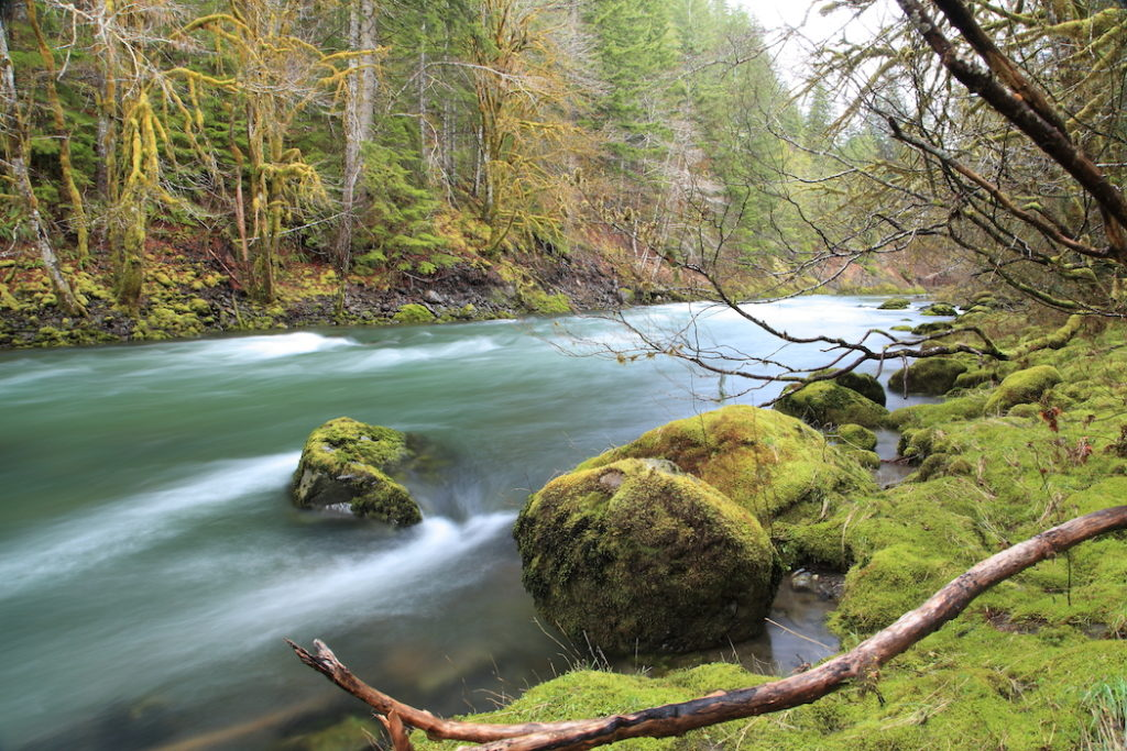 rainforest river 1