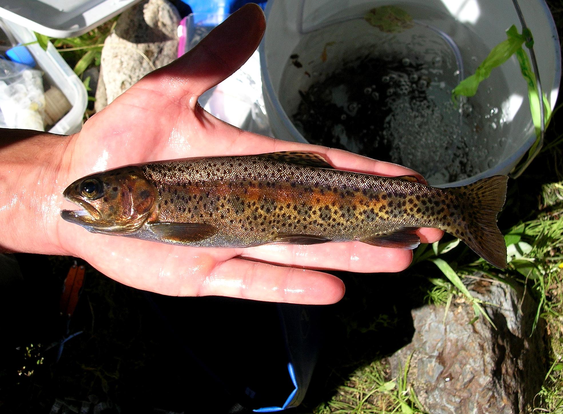 mature male Beaver Creek 5